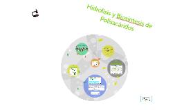 Copy of Hidrolisis y Biosintesis de Polisacaridos