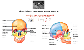 The Outer Cranium