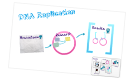 Biology Chapter 8.3 DNA Replication