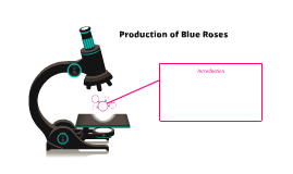 Production of Blue Roses