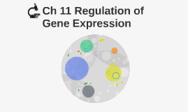 Ch 11 Regulation of Gene Expression