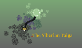 The Siberian Taiga