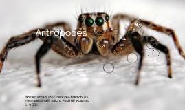 Copy of Artrópodes
