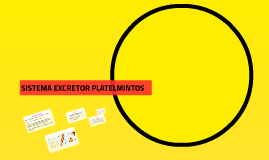 Excreción-Platelmintos