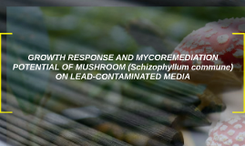 GROWTH RESPONSE AND MYCOREMEDIATION POTENTIAL OF MUSHROOM (S