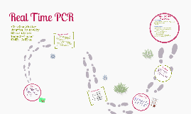 Copy of Copy of Real Time PCR