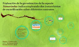 Evaluación de la germinación de la especie Tamarindus indica