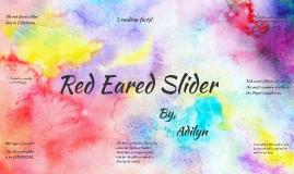 Red Eared Slider