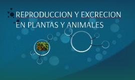 REPRODUCCION Y EXCRECION EN PLANTAS Y ANIMALES
