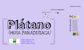 Copy of PLÁTANO