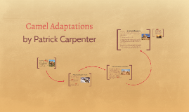 Copy of Camel Adaptations
