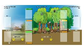 Onderzoek ecosysteem bos, boek je klasbezoek in het Bulskampveld!