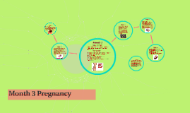 Month 3 Pregnancy
