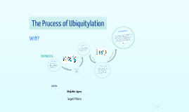 Ubiquitylation