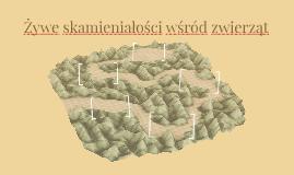 Żywe skamieniałości