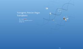 Transgenic Porcine Organ Transplants