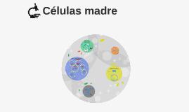 Células madre