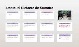 Dante, el Elefante de Sumatra