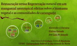 Restauração versus Regeneração natural em um manguezal neotr
