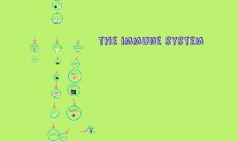 what is a immune system?