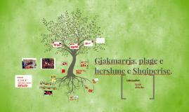Copia di Gjakmarrja projekt