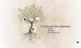 CONOZCO LAS PLANTAS