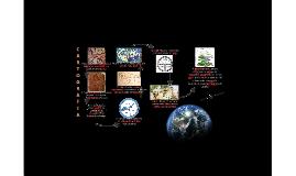 A Evolução Cartográfica