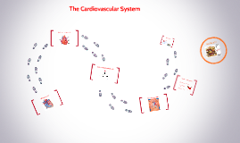 The Cardiovascular System