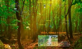 Roza, Tumba y Quema
