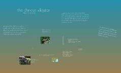 Chinese Alligator GC
