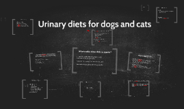 Copy of Urinary diets for dogs and cats