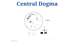 Copy of Central Dogma
