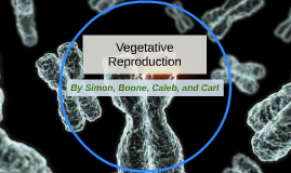 Vegetative Propagation/Reproduction