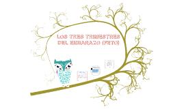 LOS TRES TRIMESTRES DEL EMBARAZO (FETO)