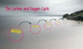 The Carbon and Oxygen Cycle.