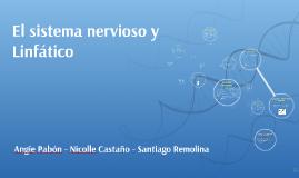 Copy of El sistema nervioso y Linfatico
