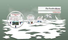 The Tundra Biome