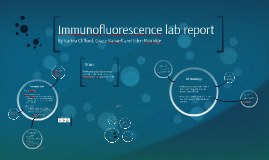 Immunofluorescence lab report