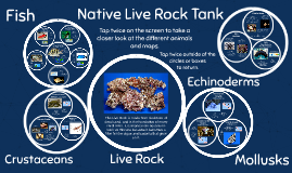 Live Rock Tank:  Facts and Trivia