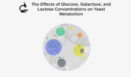 The Effects of Glucose, Galactose, and Lactose Concentration