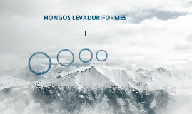HONGOS LEVADURIFORMES