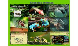 Especies exoticas.