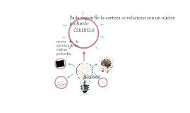 NEUROANATOMIA DEL CEREBRO Y EL CEREBELO