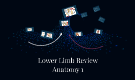 Copy of Lower Limb Review
