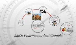 GMO: Pharmaceutical Camels