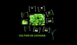 Copy of LECHUGA