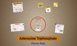 ATP & ATP Synthase Presentation