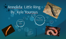 Annelida: Little Ring