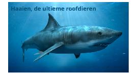 Haaien, de ultieme roofdieren