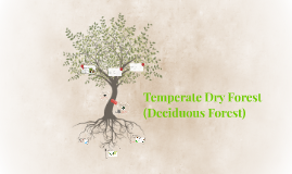 Temperate Dry Forest